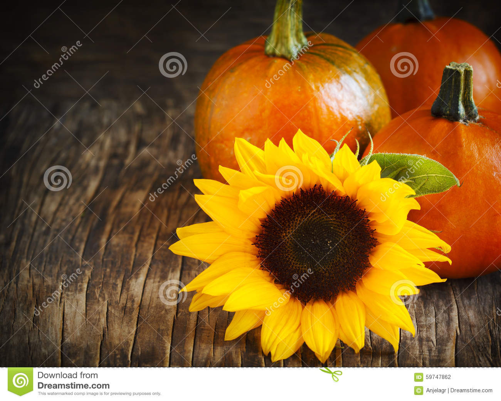 Fall Pumpkin Background Wallpaper Autumn Pumpkins And Sunflower Stock Photo Image Of