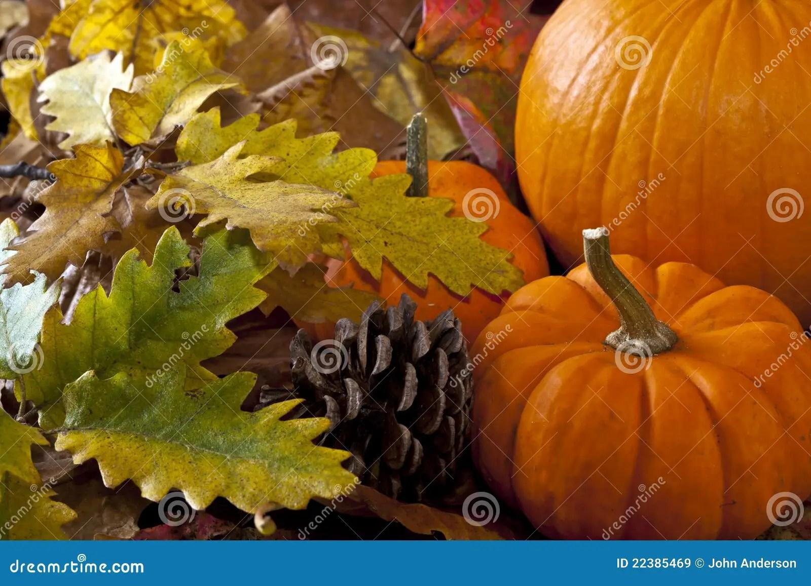 Fall Scenes Wallpaper With Pumpkins Autumn Scene With Pumpkins Stock Image Image Of Fall