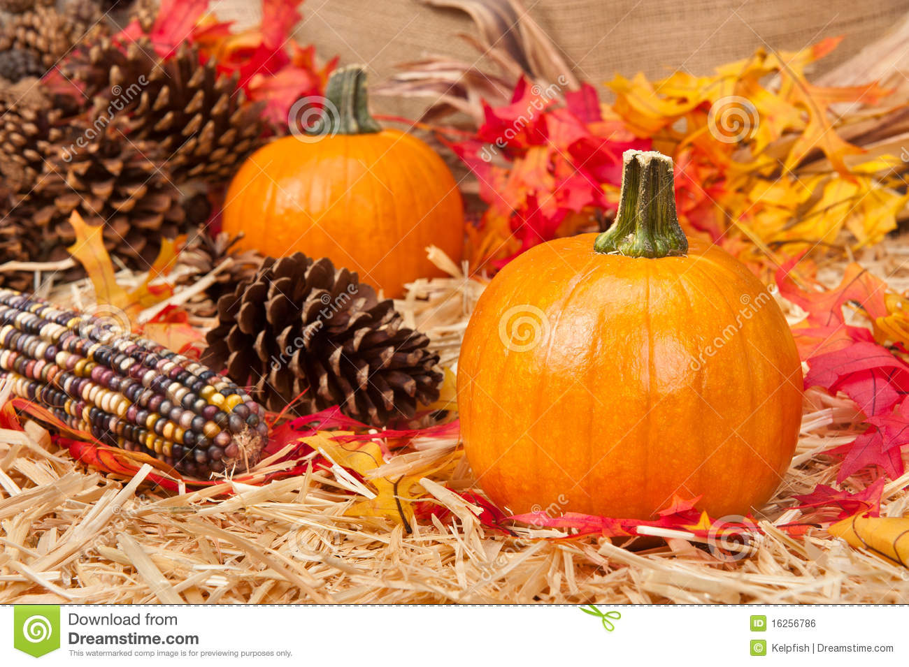 Fall Desktop Wallpaper With Pumpkins Autumn Theme Stock Photo Image Of Dried Decoration