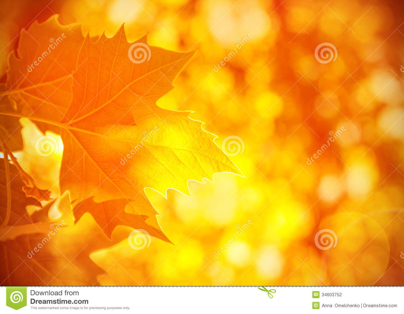 Fall Leaves Wallpaper Border Autumnal Foliage Background Stock Photography Image