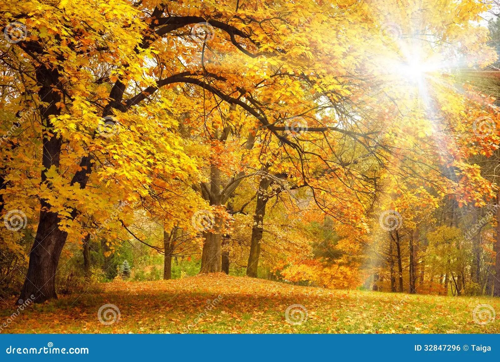 Fall Leaves Pathway Computer Wallpaper Autunno Dell Oro Con Luce Solare Bei Alberi Nella Foresta