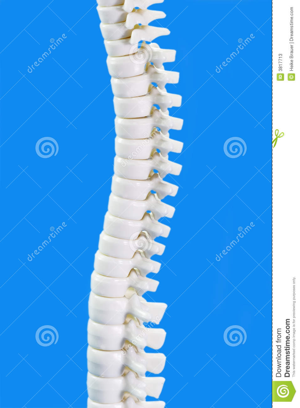 Stock Image Dreamstime Backbone In Detail Stock Image Image Of Anatomical