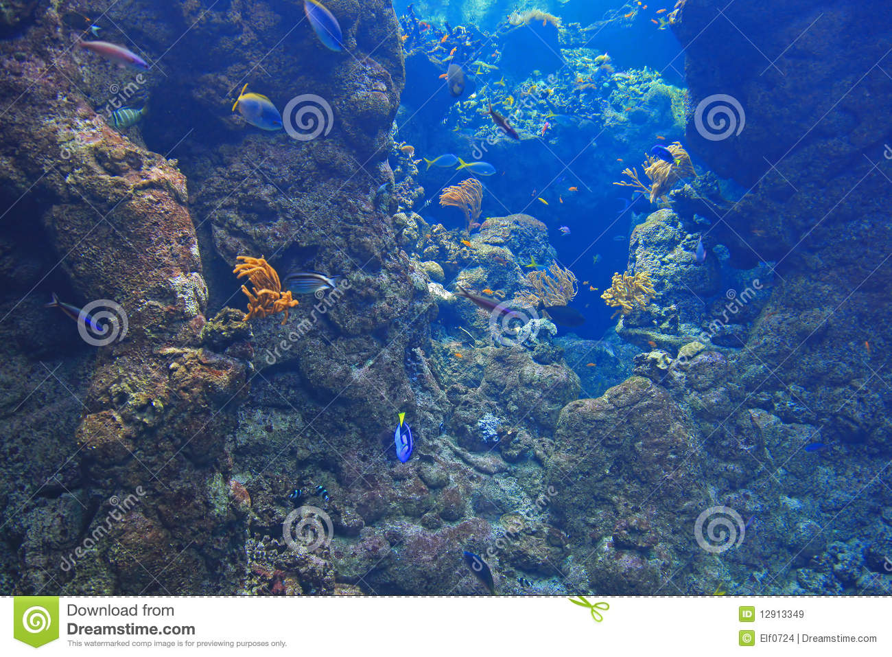 Colorful Animal Print Wallpaper Background Picture Of Undersea Stock Image Image Of