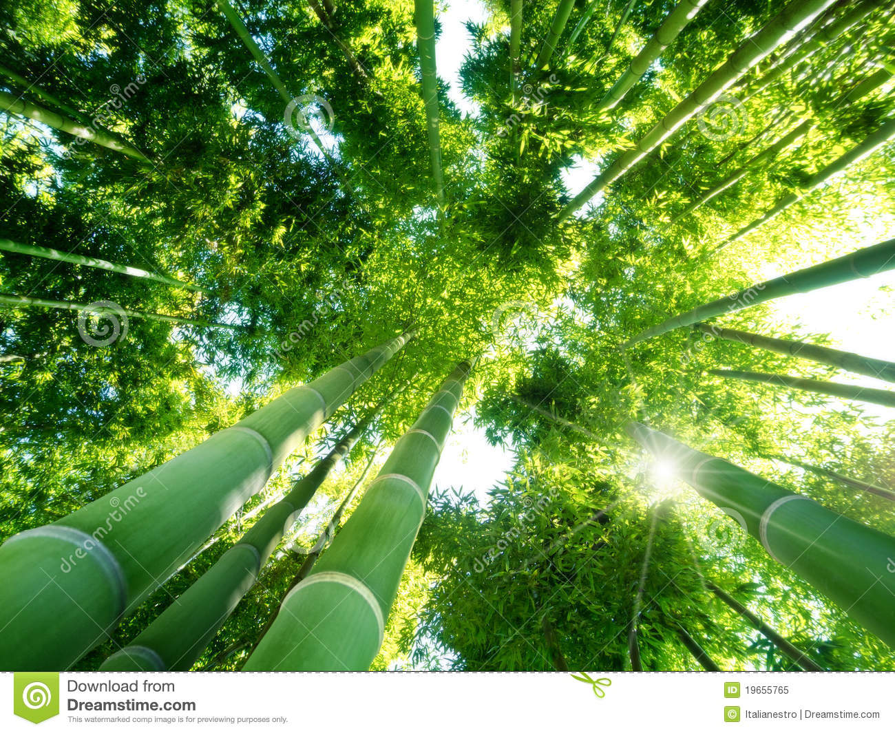 Abstract Fall Colors Wallpaper Bamboo Forest Royalty Free Stock Photo Image 19655765