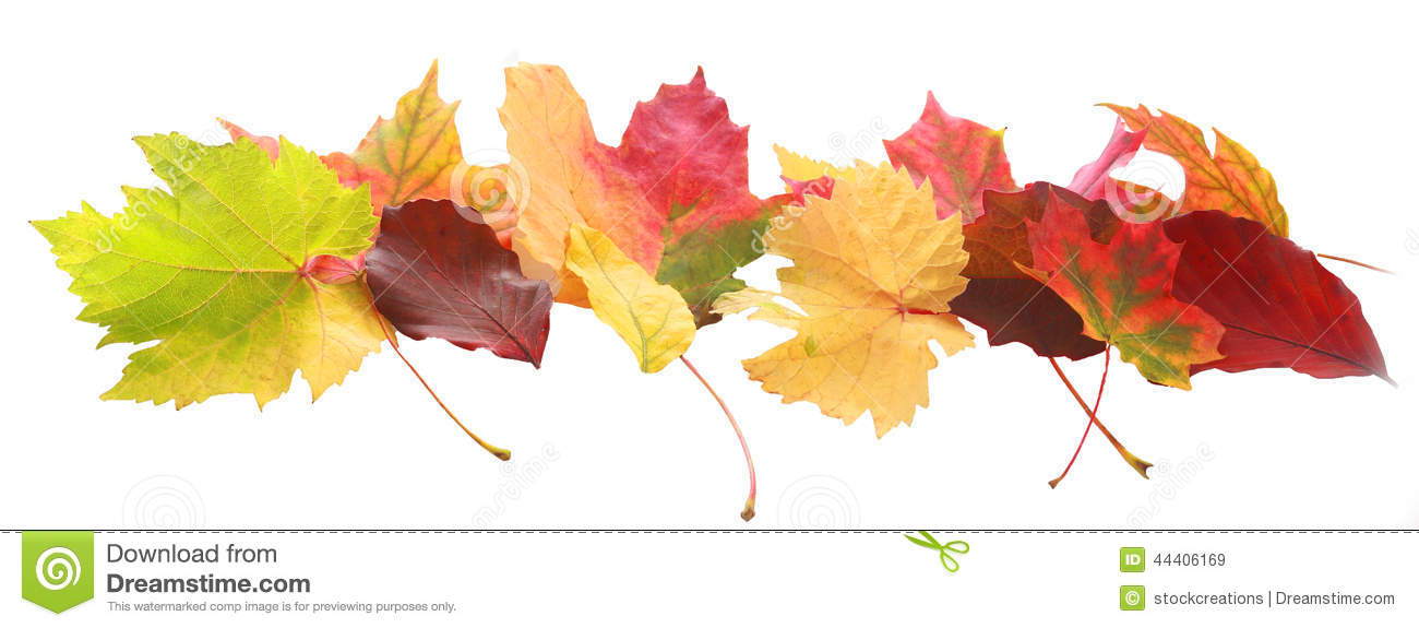 Hd Wallpaper Fall Leaf Change Banner Of Colorful Autumn Or Fall Leaves Stock Image