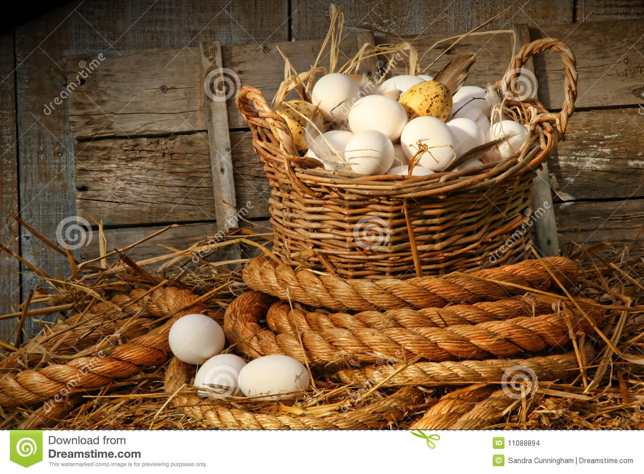 Bolti Farmhouse Basket Of Eggs On Straw Stock Images Image 11088894