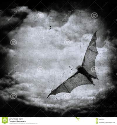 Bat In The Dark Cloudy Sky, Halloween Background Stock Images - Image: 16356254