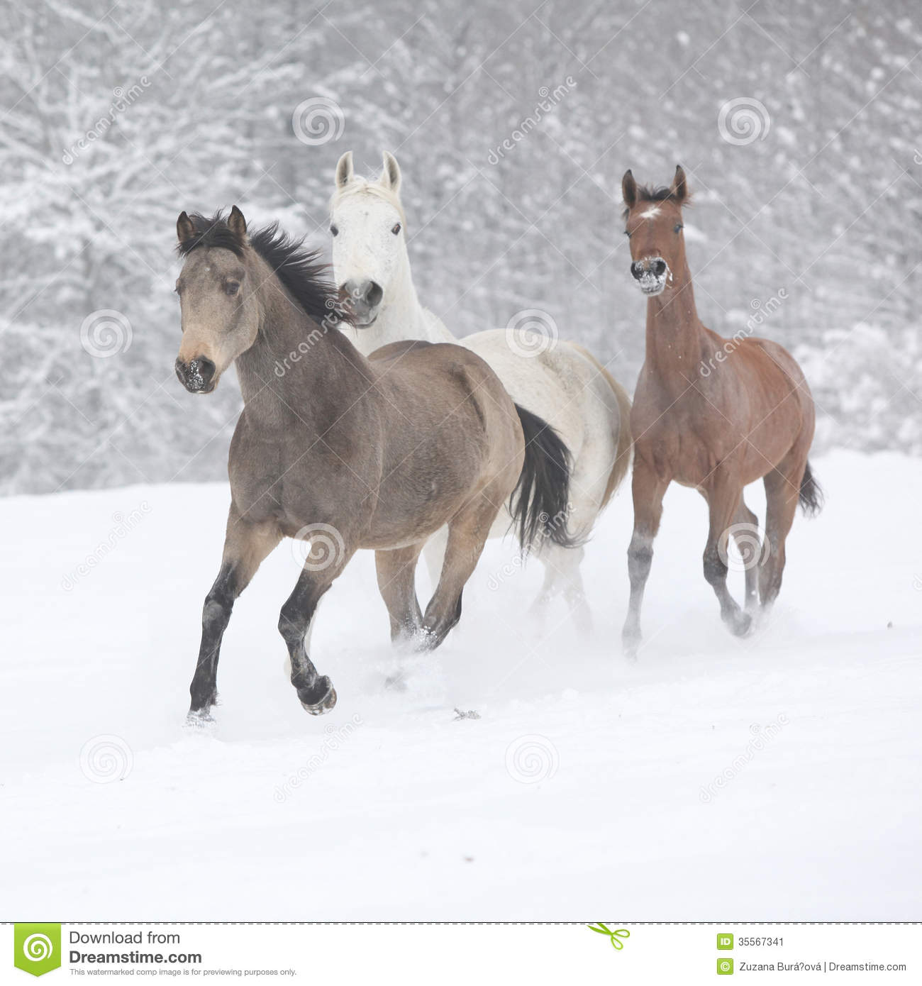 Free Snow Falling Wallpaper Batch Of Horses Running In Winter Stock Image Image Of