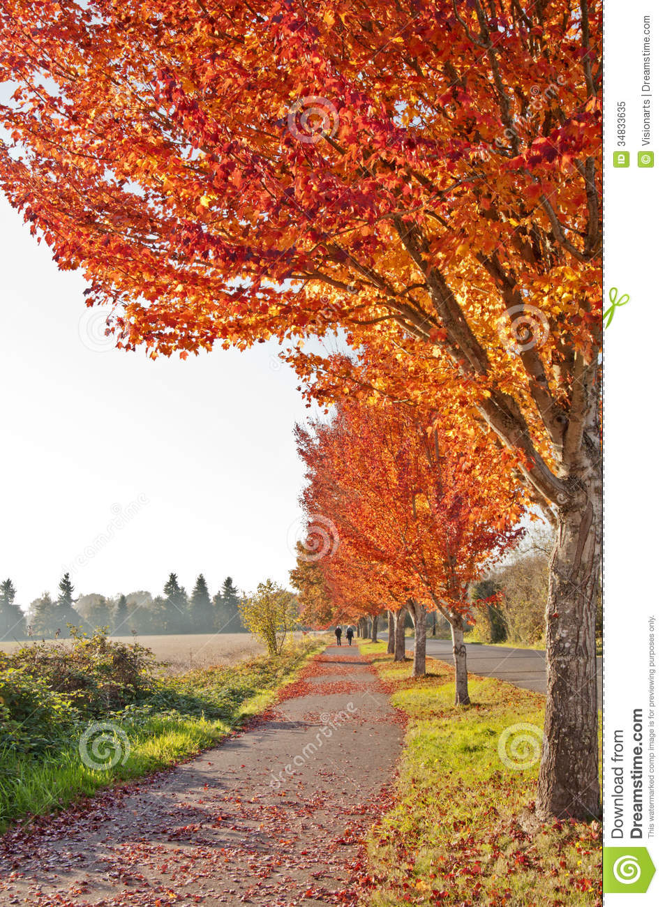 Fall Foliage Wallpaper Hd Beautiful Autumn Walkway With Orange Colored Leaves Stock