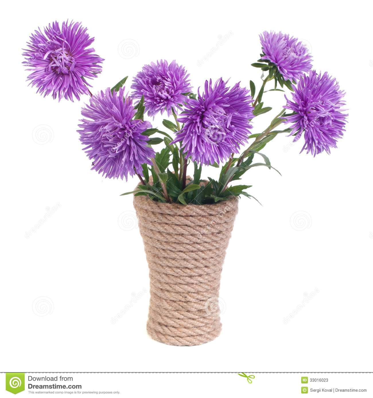 Beautiful Flower Vases The Beautiful Blue Aster Flowers In A Vase Stock Image