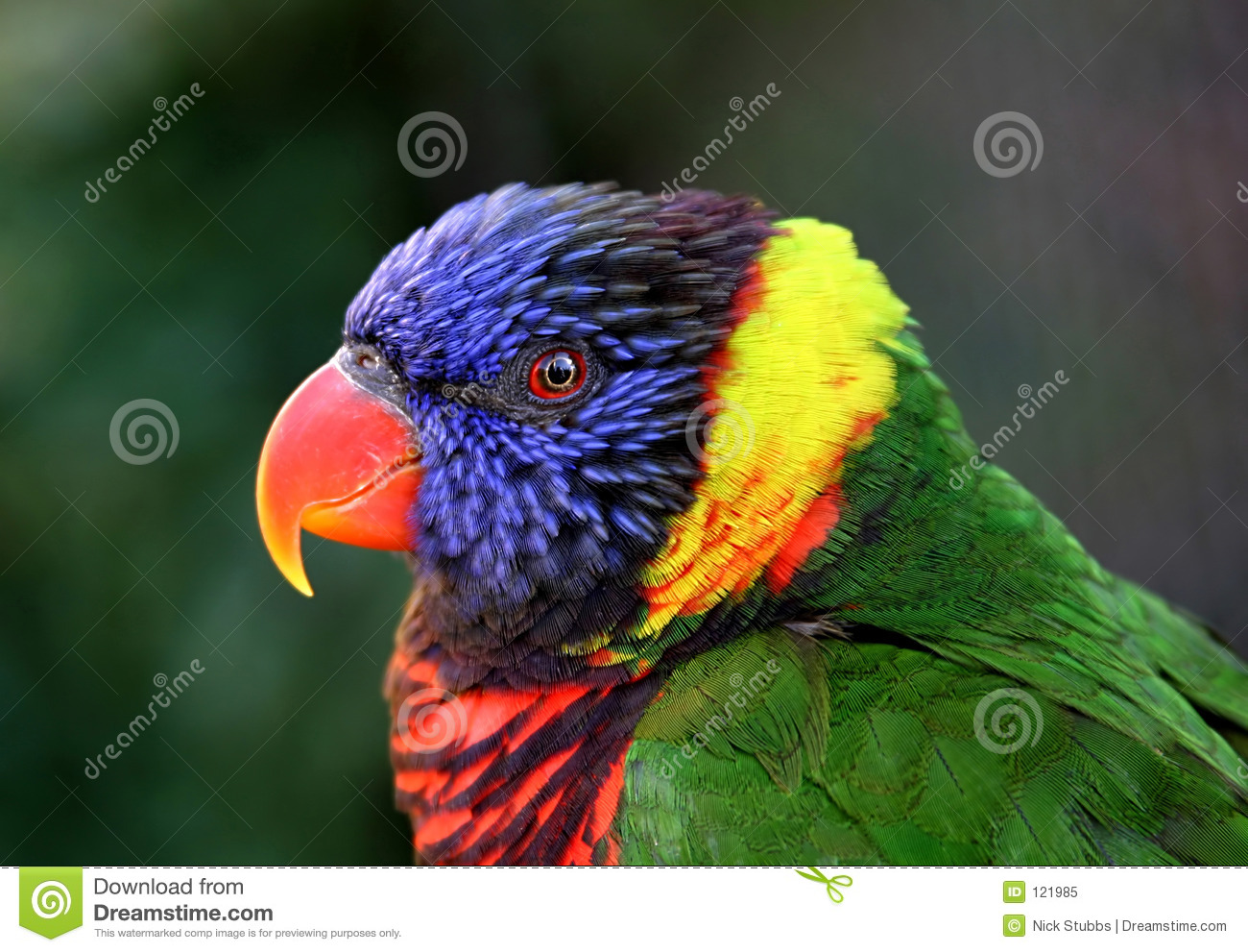 3d Girl Wallpaper Download Beautiful Clean Clear Shot Of Colorful Parrot Royalty