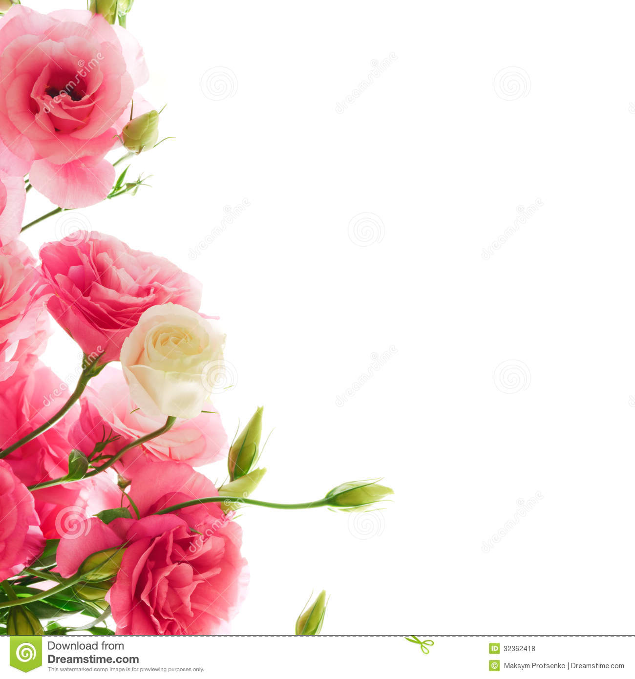 Cute Nail Arts Wallpaper Beautiful Eustoma Flowers On The White Background Royalty
