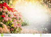 Beautiful Flowers Garden Background. Turkish Carnation ...