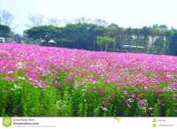 Beautiful Pink Flower Garden At Jim Thompson's Farm ...