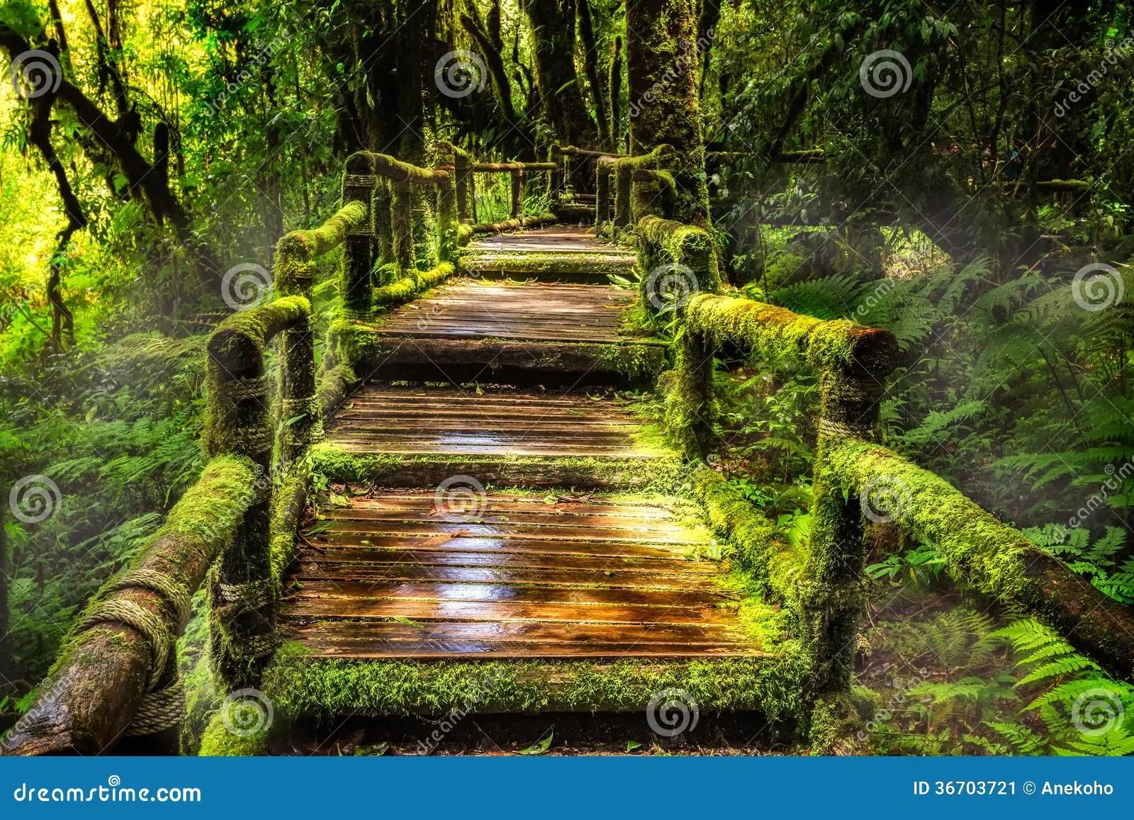 Rain Fall Hd Wallpaper Download Beautiful Rain Forest At Ang Ka Nature Trail Stock Image