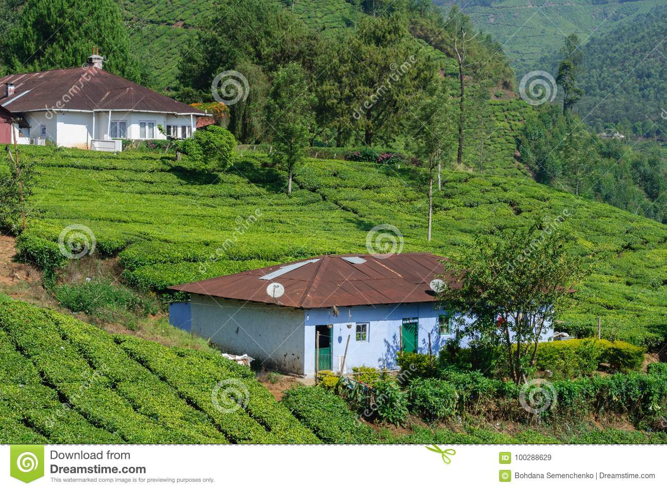 Beautiful Farmhouse In Kerala Beautiful Scenic View Of House In Tea Field In Mountain Near