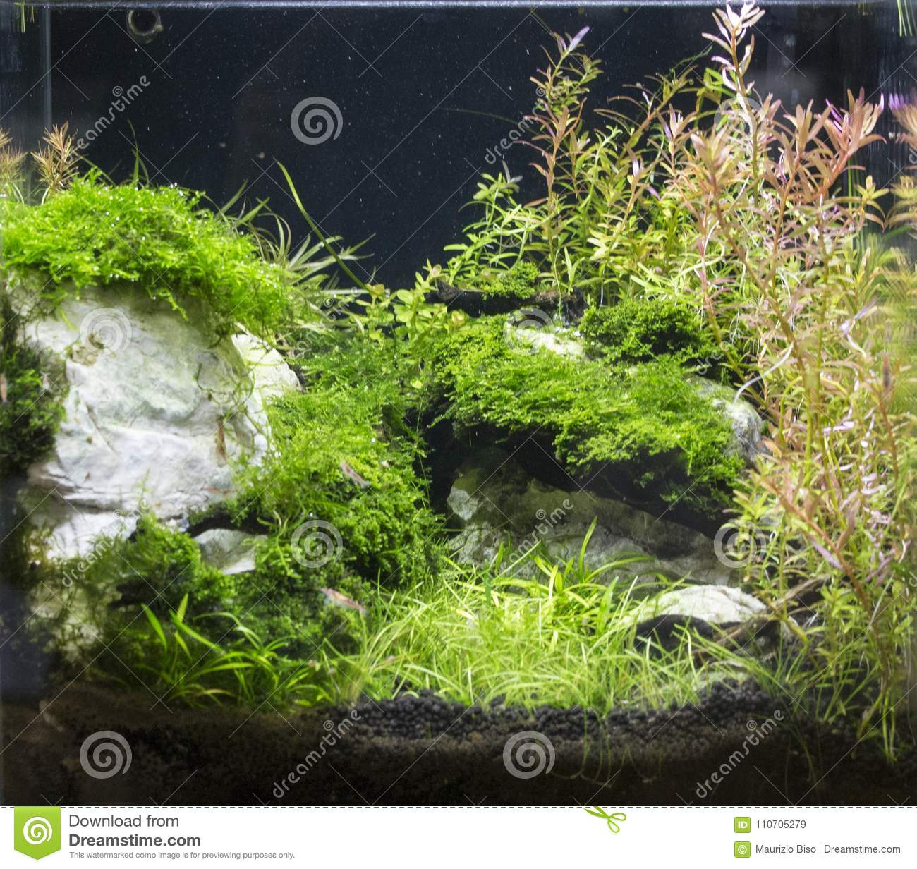 Decoration Interieur Aquarium Bel Aquarium D Eau Douce Planté Tropical Image Stock Image Du