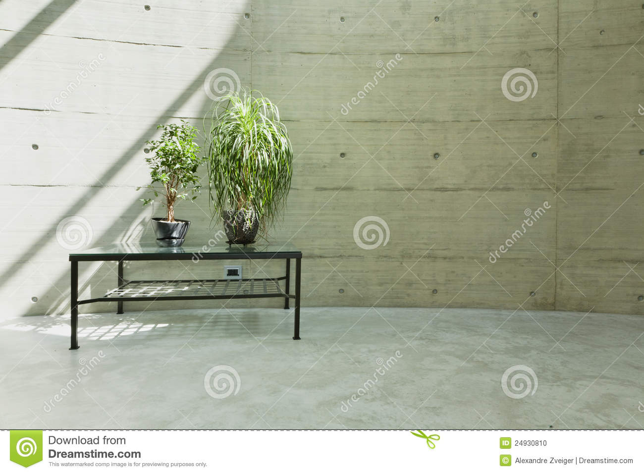 Beton Wall Beton Wall Stock Photo Image Of Plant Nobody Indoor