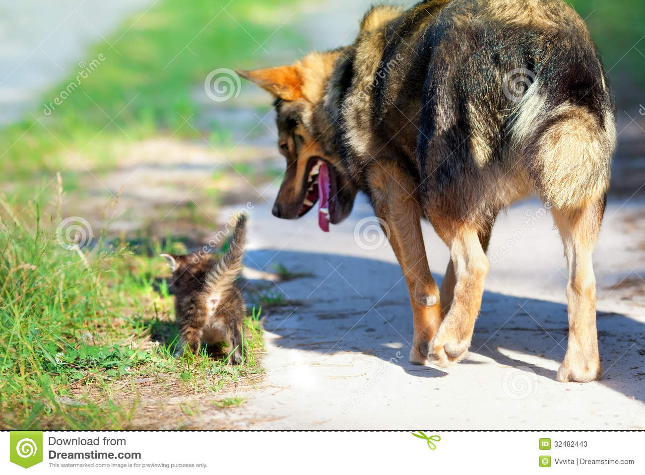 Cute Little Gray Cat For Wallpaper Big Dog And Little Kitten Stock Photos Image 32482443