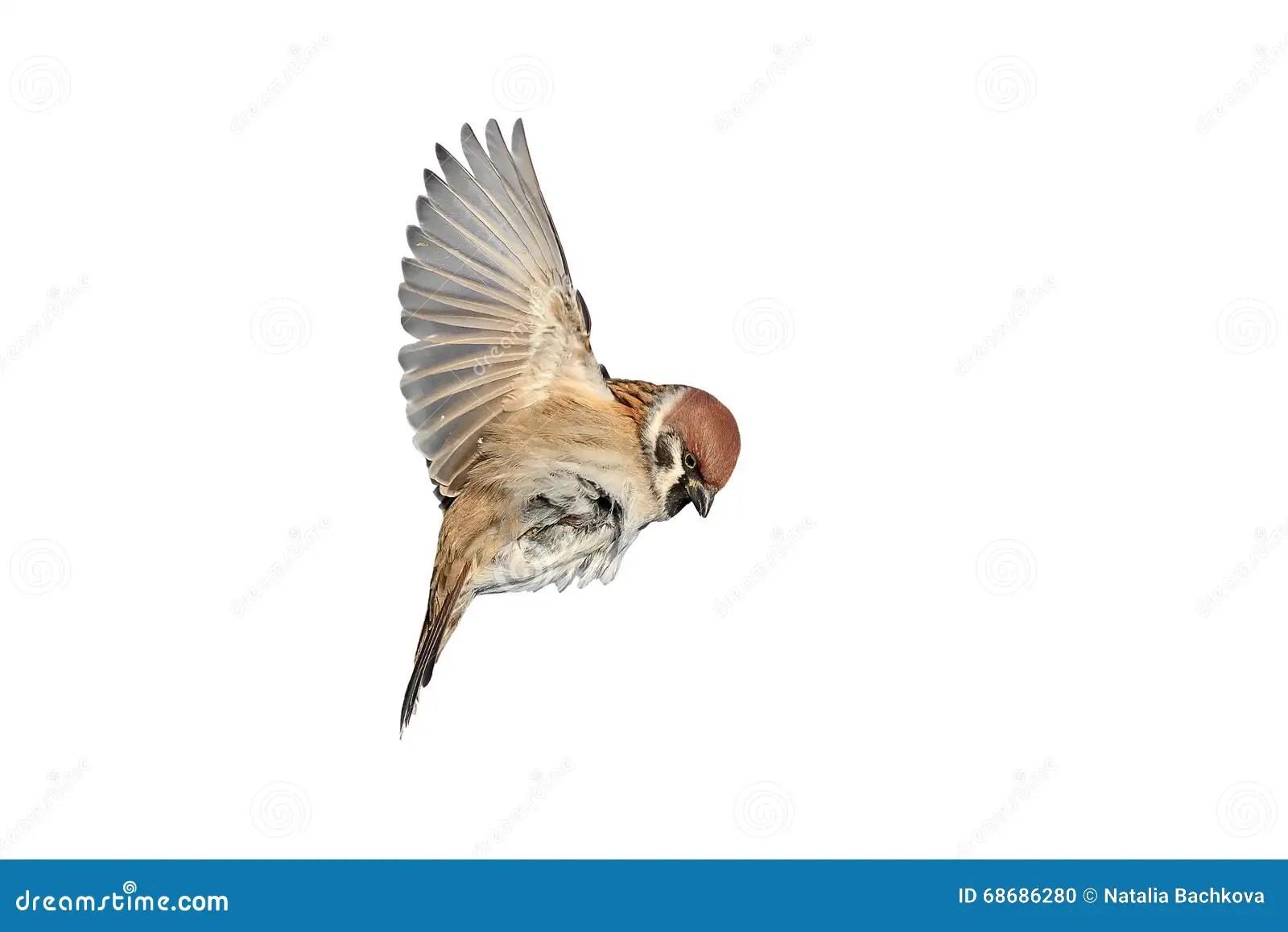 Che Quotes Wallpaper White Bird Wings Spread