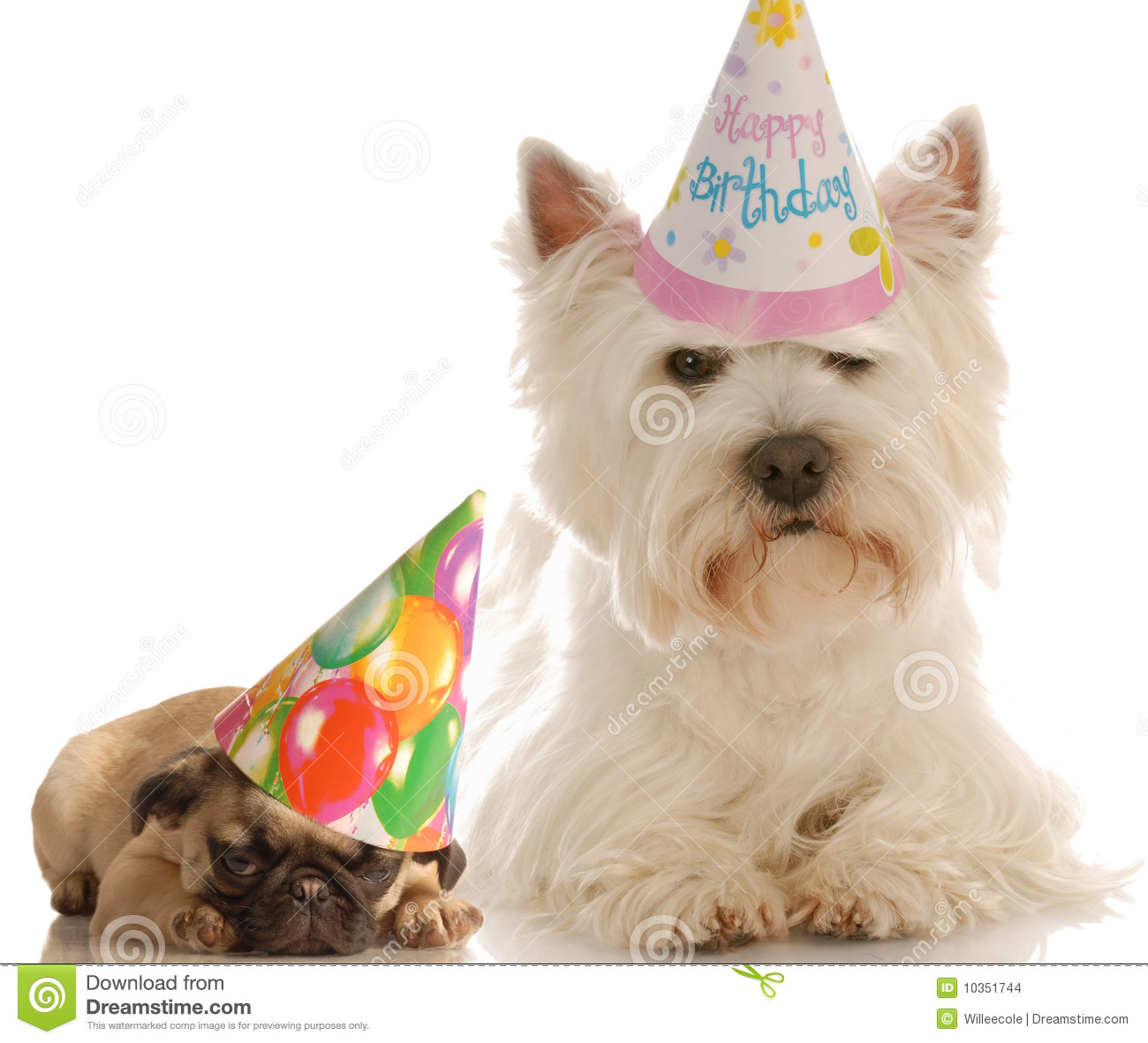 Birthday Cake Wallpaper 3d Download Birthday Dogs Stock Images Image 10351744