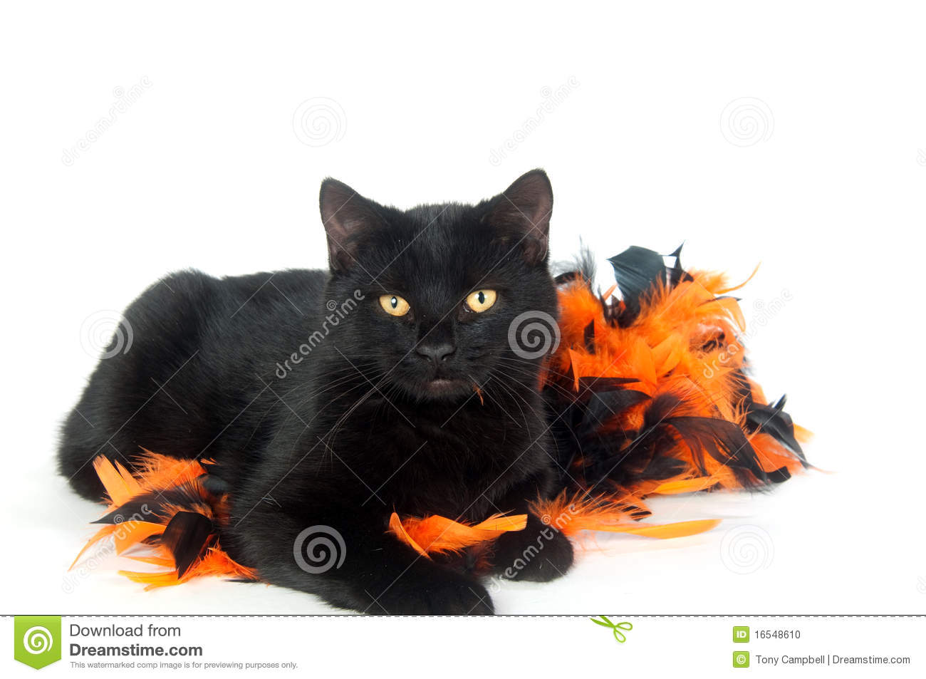 Black Cat Decorations Black Cat With Halloween Decorations Stock Photo Image