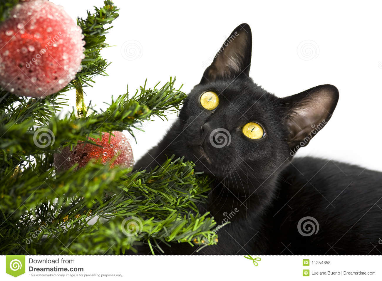 Black Cat Decorations Black Cat Lying Under Christmas Tree Royalty Free Stock