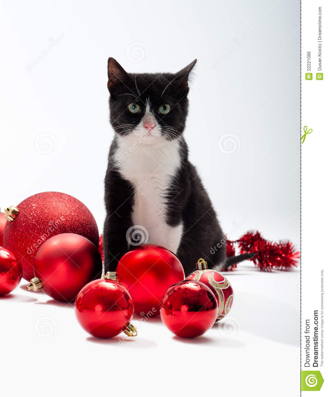 Black Cat Decorations Black Kitten And Christmas Decorations Royalty Free Stock