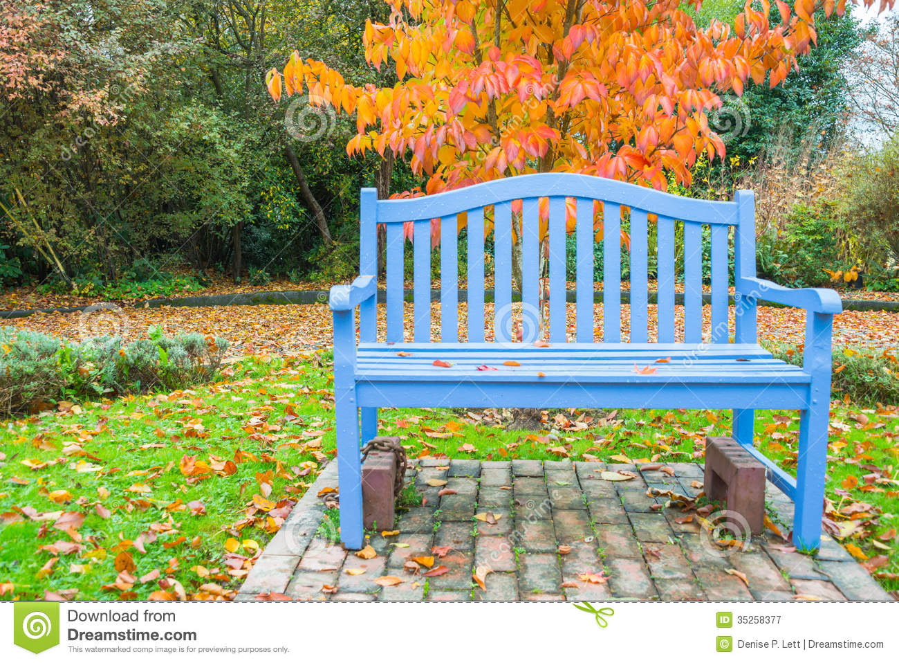 Wooden Park Benches Front Blue Bench Orange Fall Color Tree Stock Image Image Of