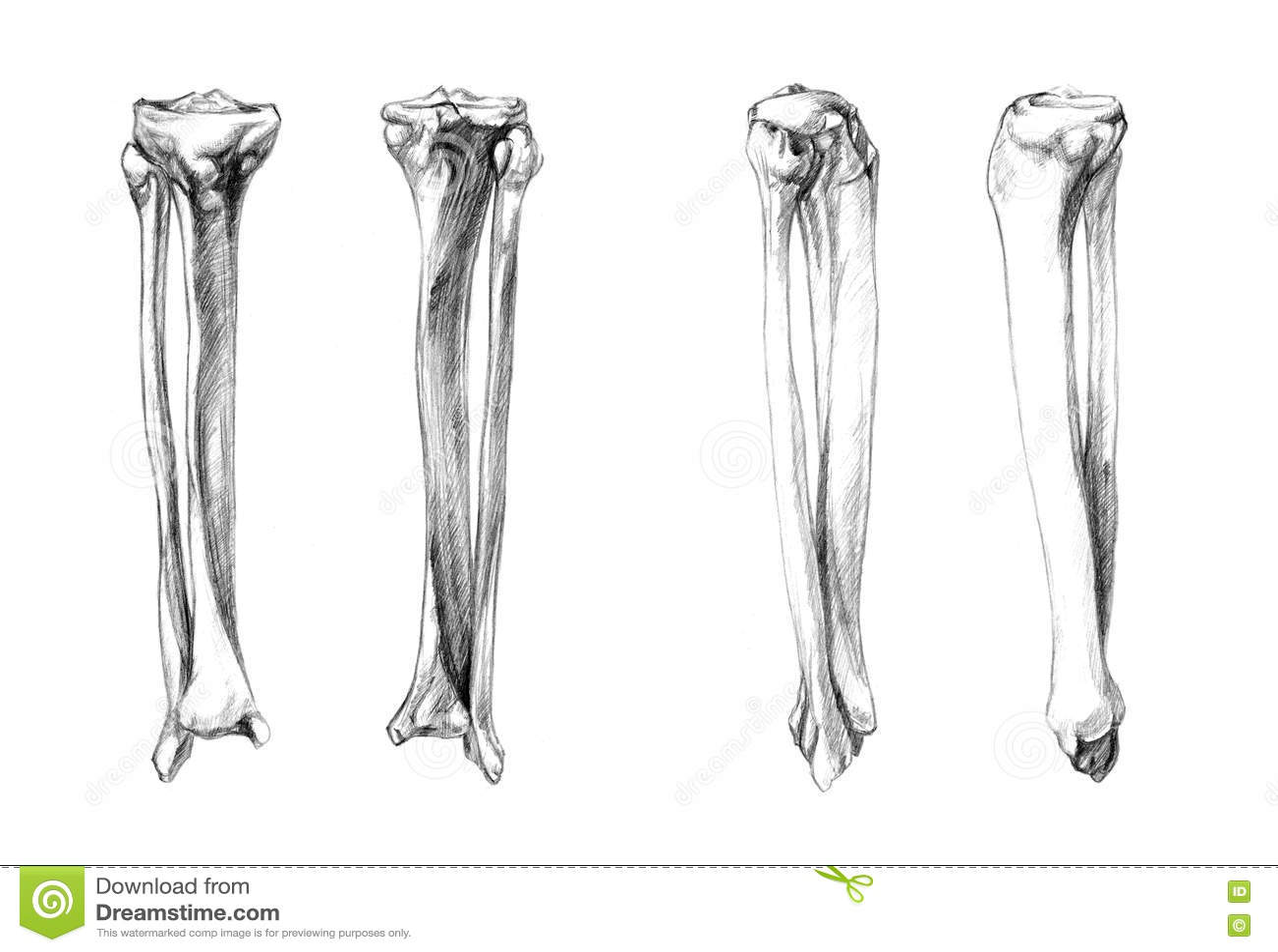tibia fibula bone diagram