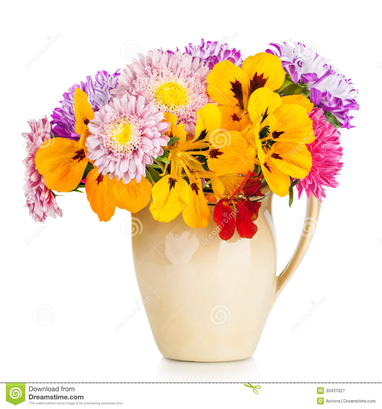 Free Fall Mums Wallpaper Bouquet Of Aster Flowers In Pot Isolated On White