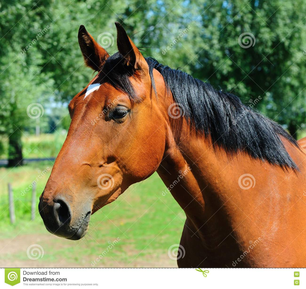Animal Farm Wallpaper Brown Horse Head Stock Photo Image Of Equestrian Meadow
