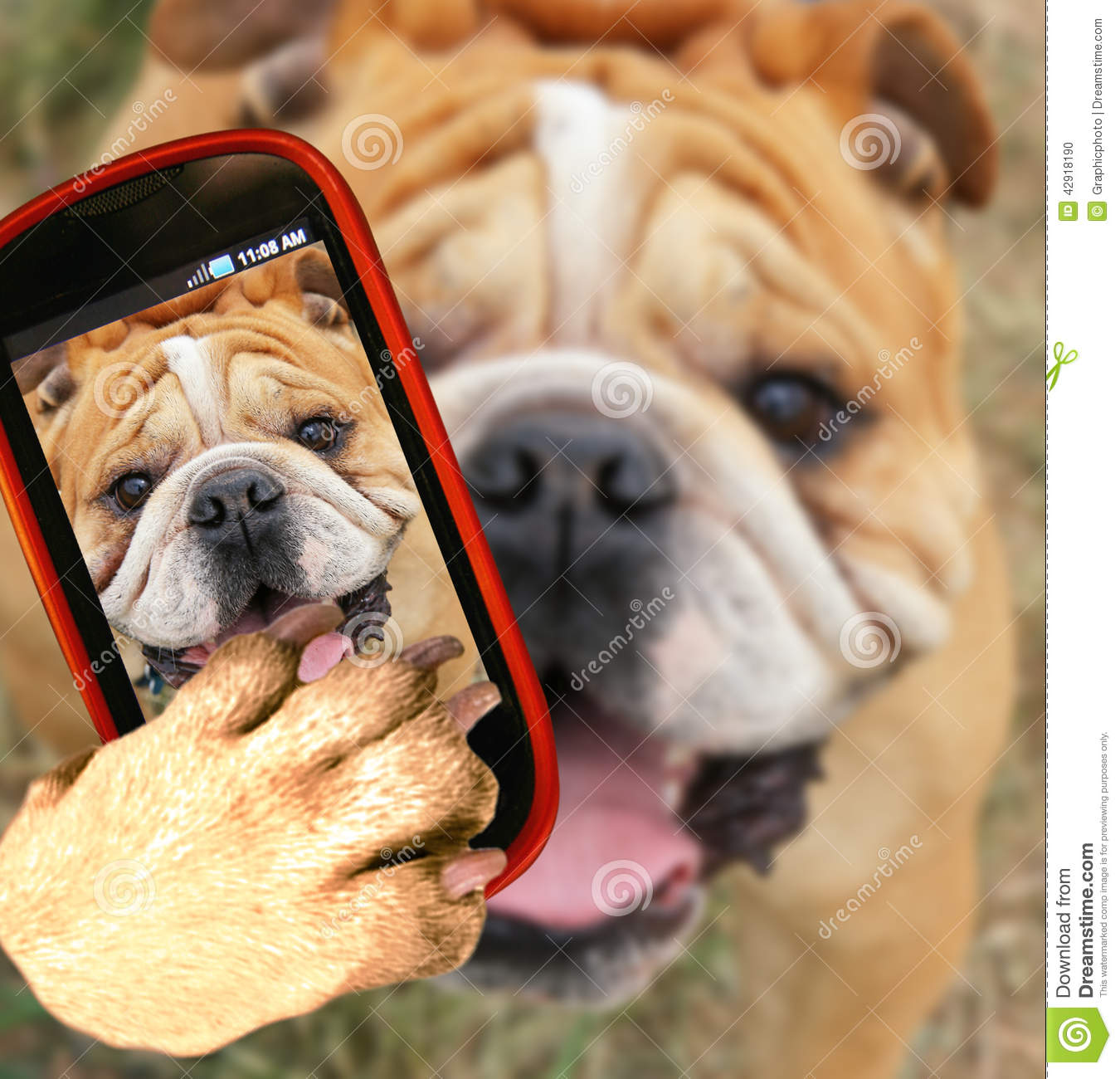 Fall Cell Phone Wallpapers Bulldog Stock Photo Image Of Teeth Mouth Skin Whiskers