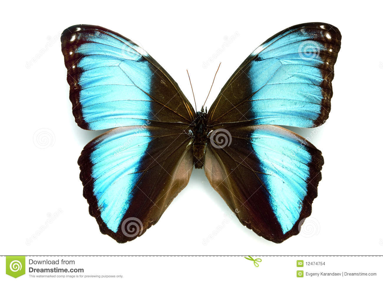 Mooie Vlinders Butterfly Series - Rare Beautiful Butterfly Stock Images