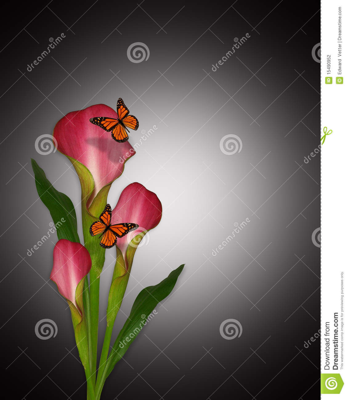 Calla Lily Flower Template Calla Lilies And Butterflies Stock Photography - Image
