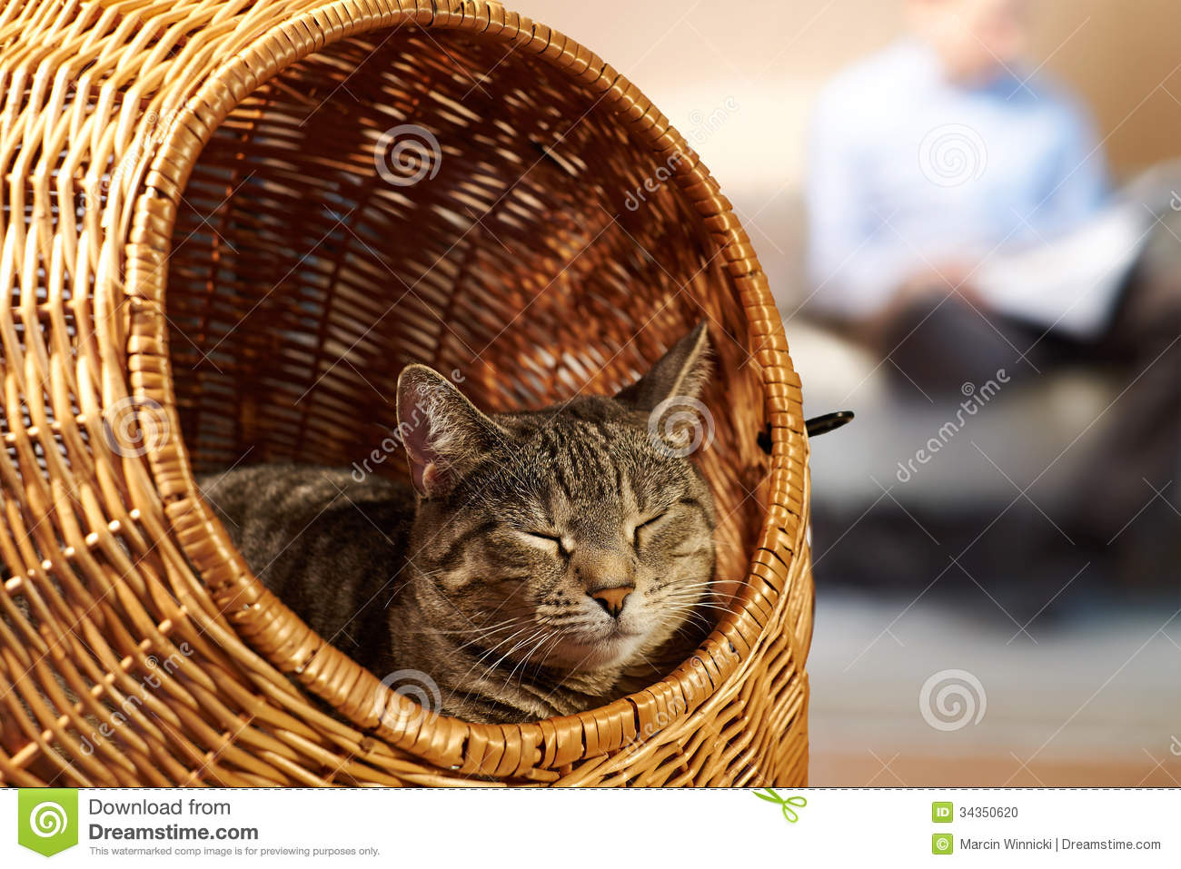 Animal Wicker Hamper Saturday At Home With Cat Stock Photo Image Of Caturday
