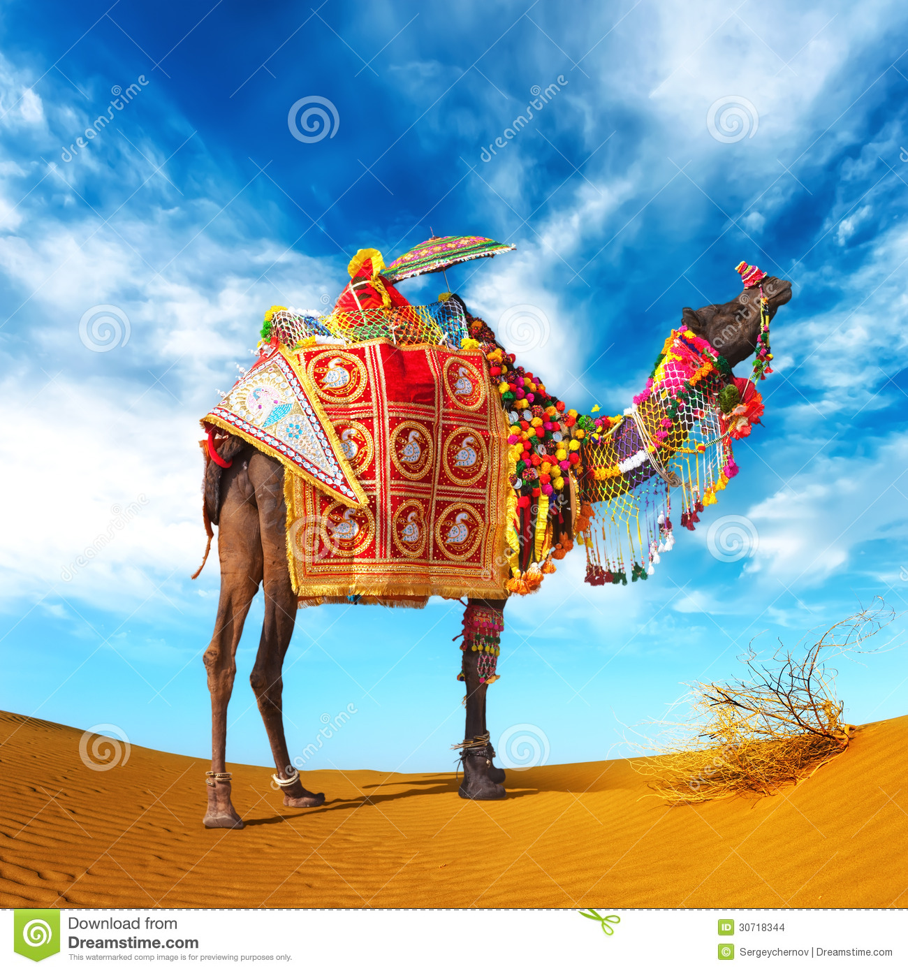Egypt Pyramids Hd Wallpapers Camel In Desert Stock Photo Image Of India Attraction