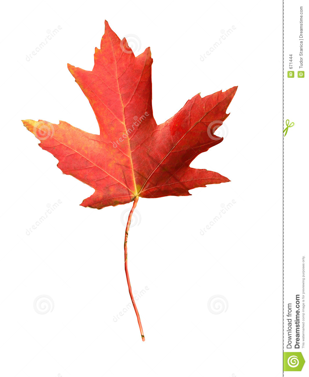 Fall Of The Leafe Wallpaper Canada Flag Symbol Stock Images Image 671444