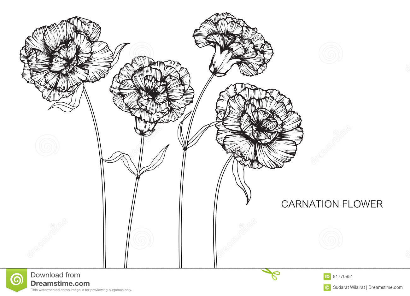 carnation leaf diagram