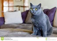 Cat In Living Room Stock Photo