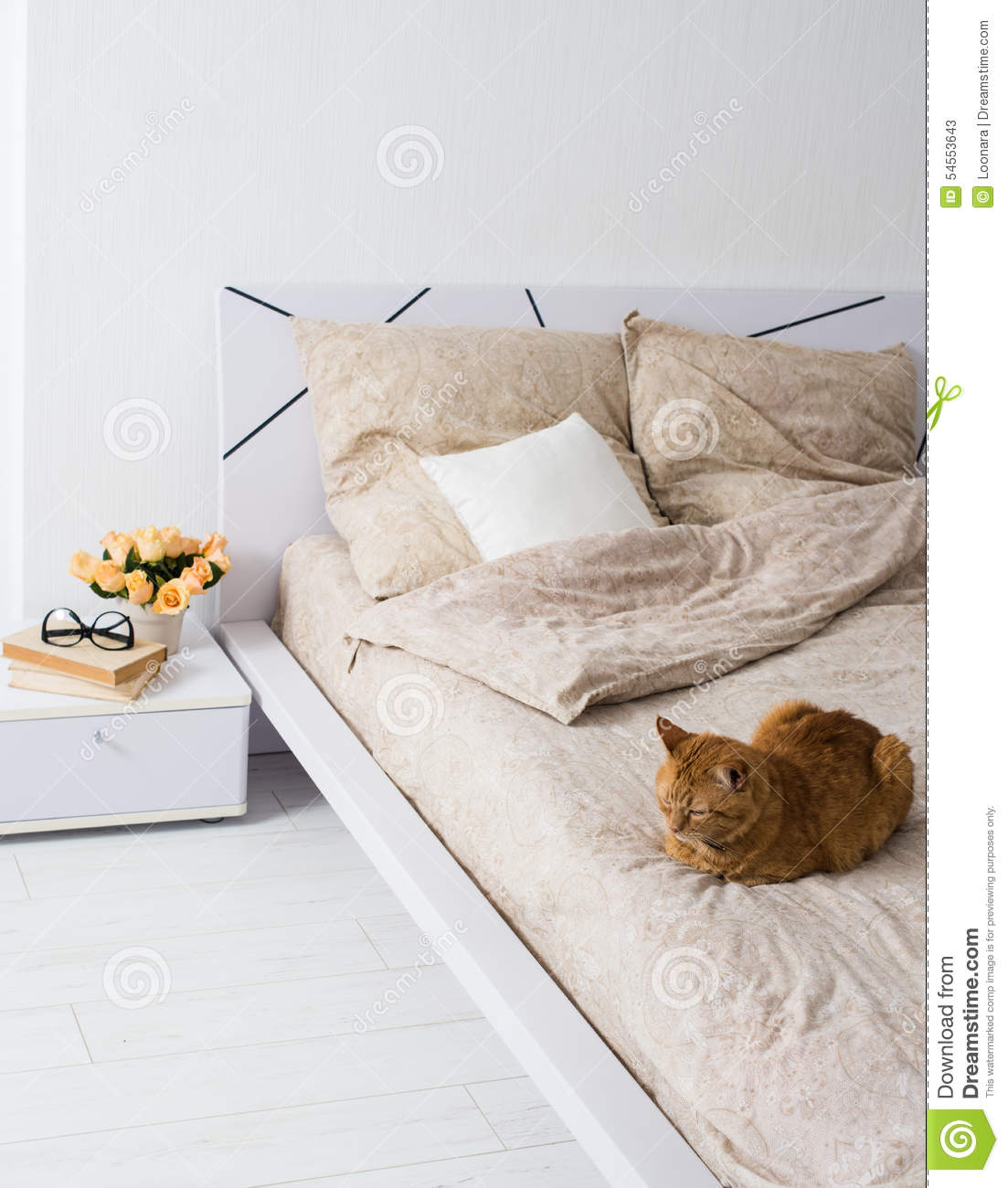 Cat On The Bed Modern Bedroom Royalty Free Stock Image