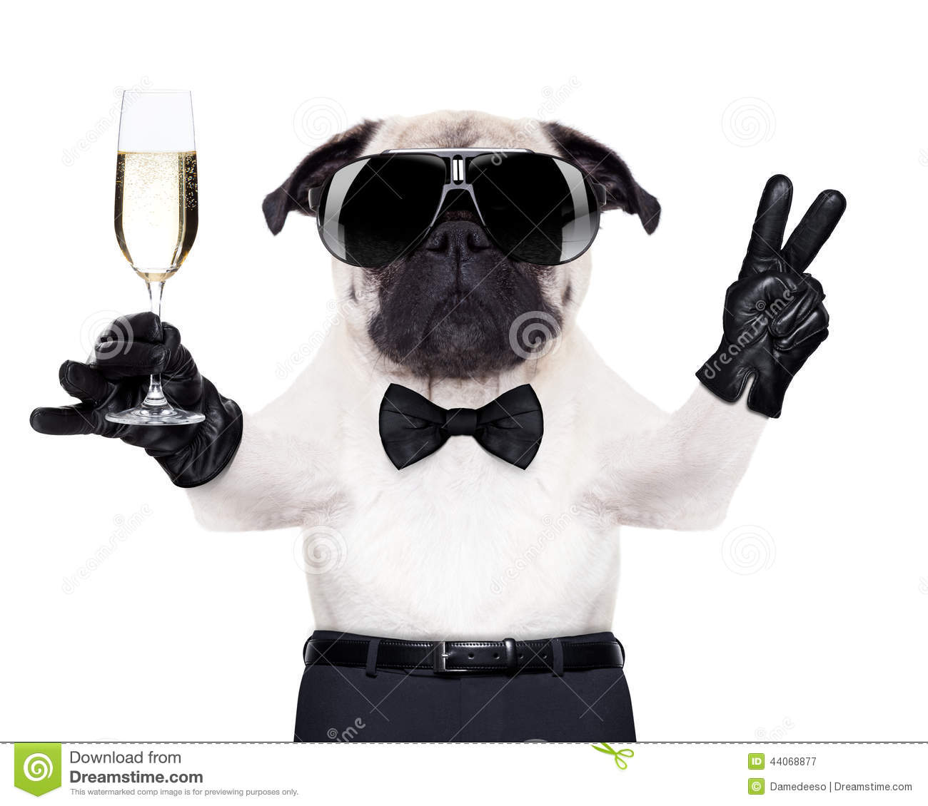 Happy New Year D Video Champagne Glass Dog Stock Photo Image 44068877
