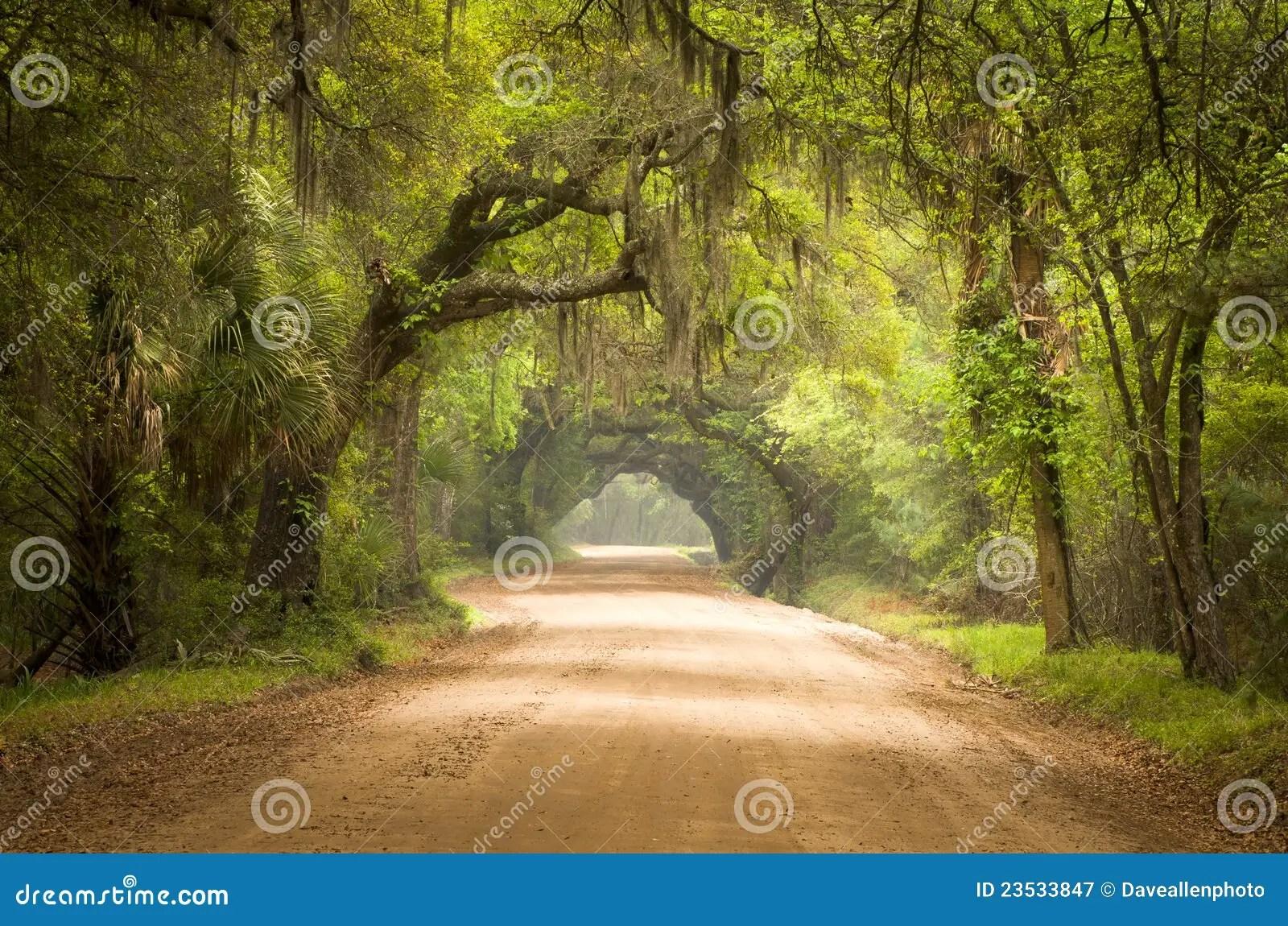 Fall 4k Wallpaper Charleston Sc Dirt Road Forest Deep South Moss Stock Image