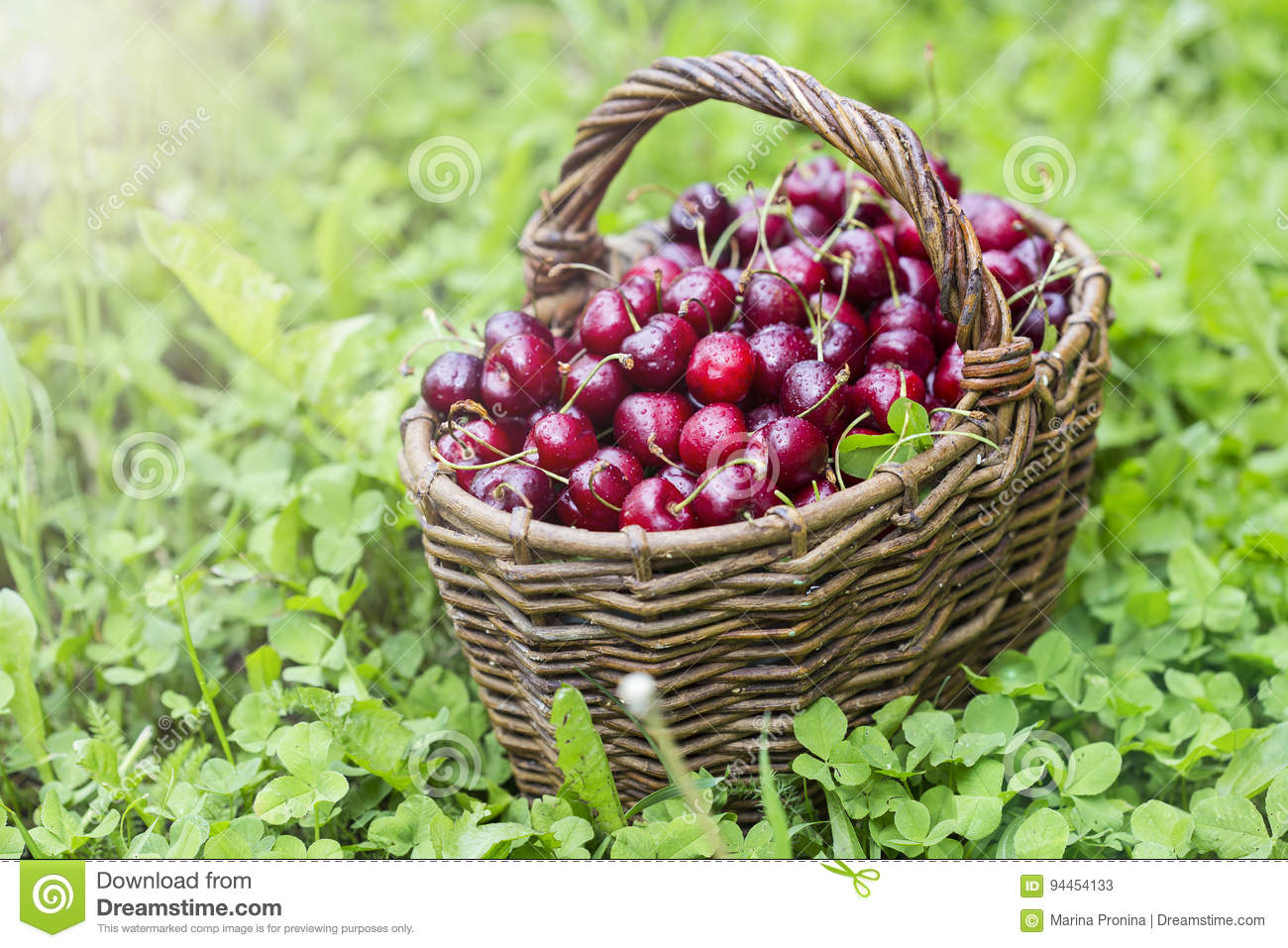 Cherries In A Large Wicker Basket Stock Image Image Of