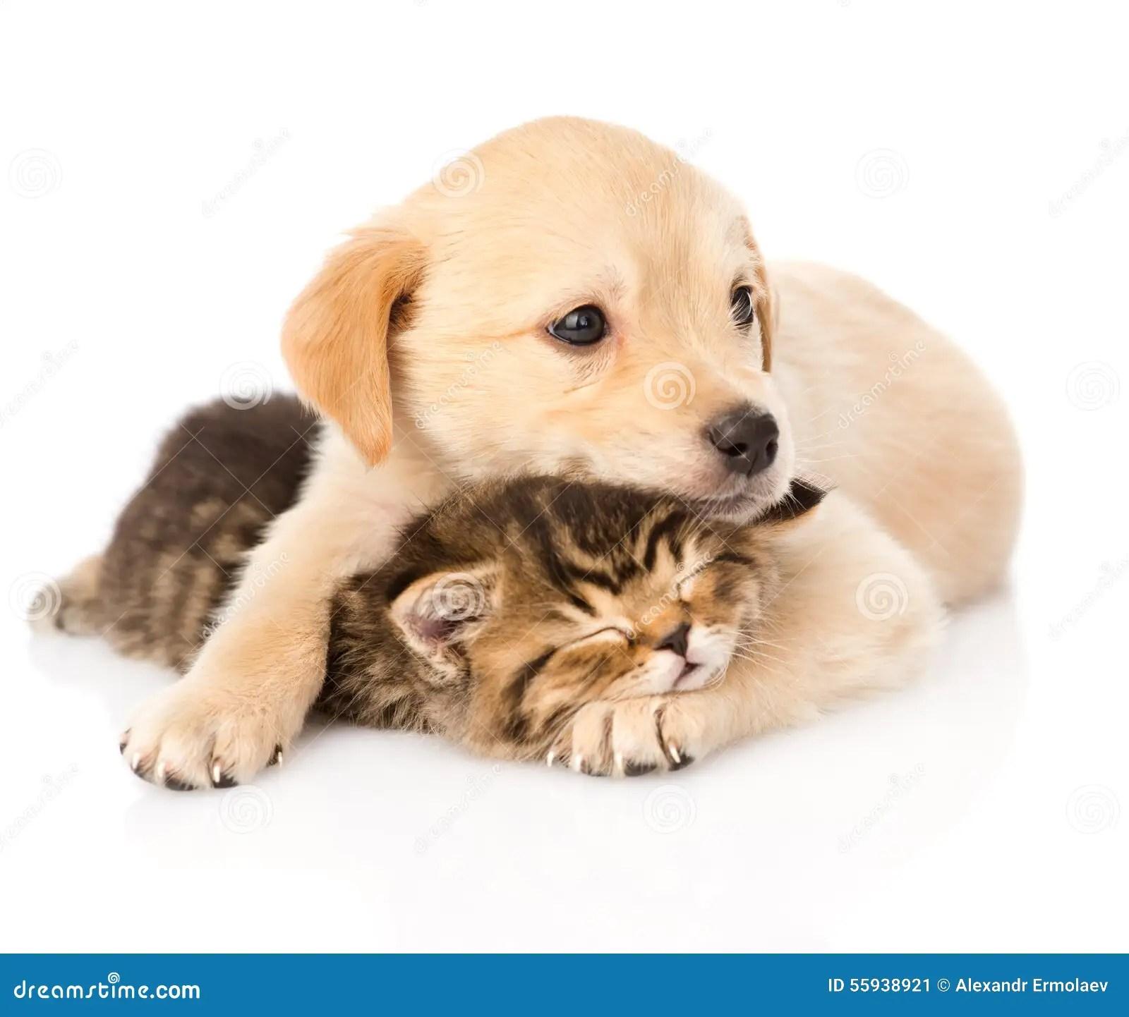 Cute Pet Animals Hd Wallpapers Chiot De B 233 B 233 Et Petit Chaton Ensemble D Isolement Sur Le