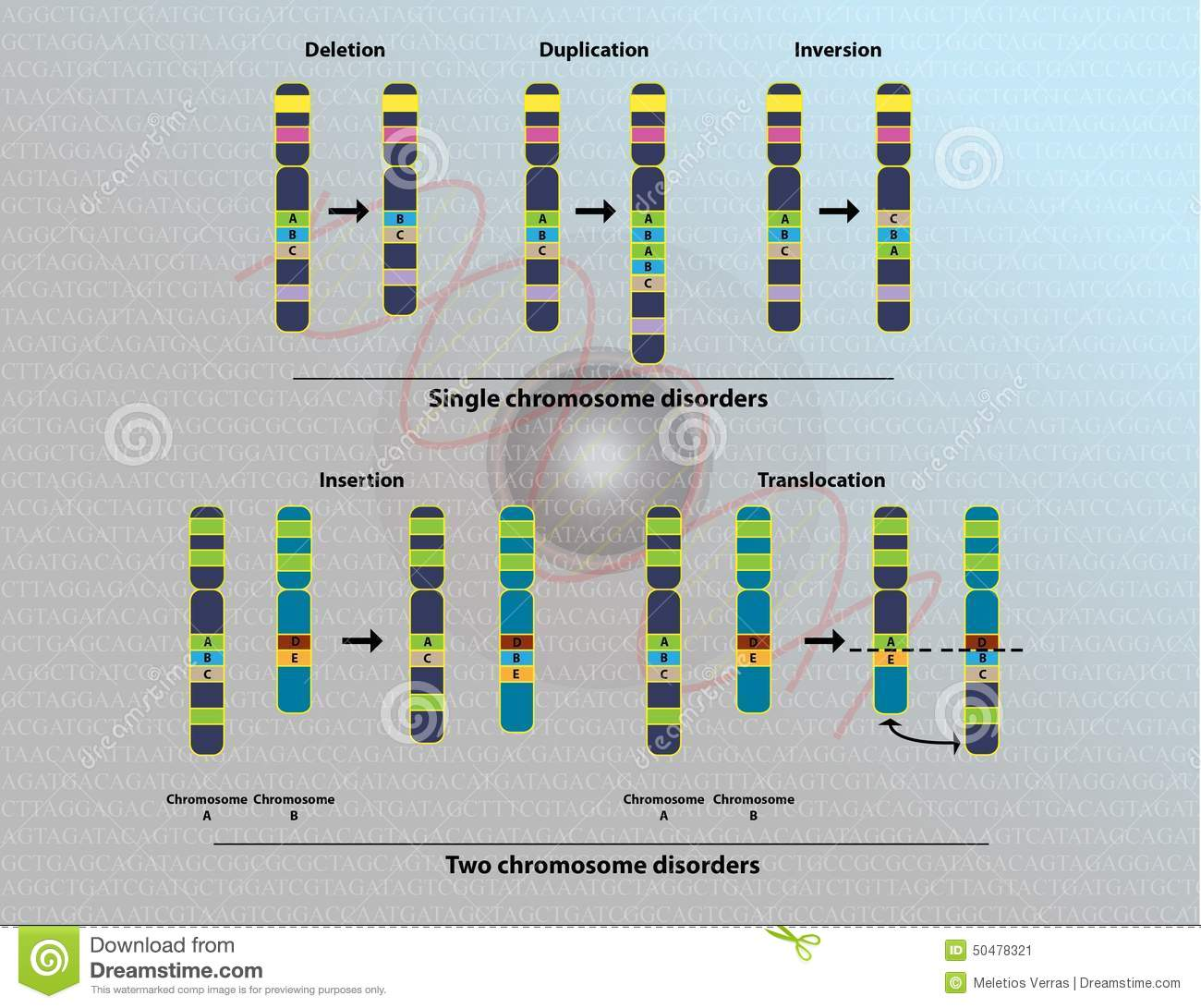 Chromosome Deletion Mutation Chromosome Abnormality Cartoon Vector