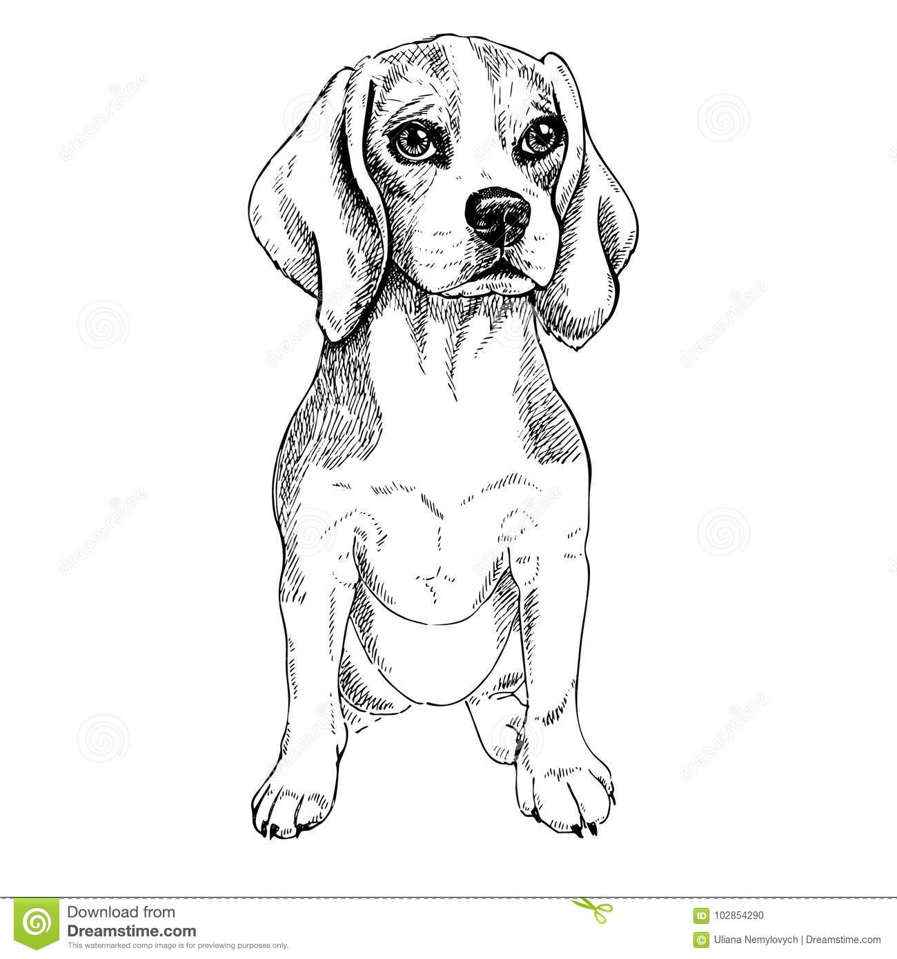 drawn hat police auto electrical wiring diagramvector sketch dog beagle breed vector illustration