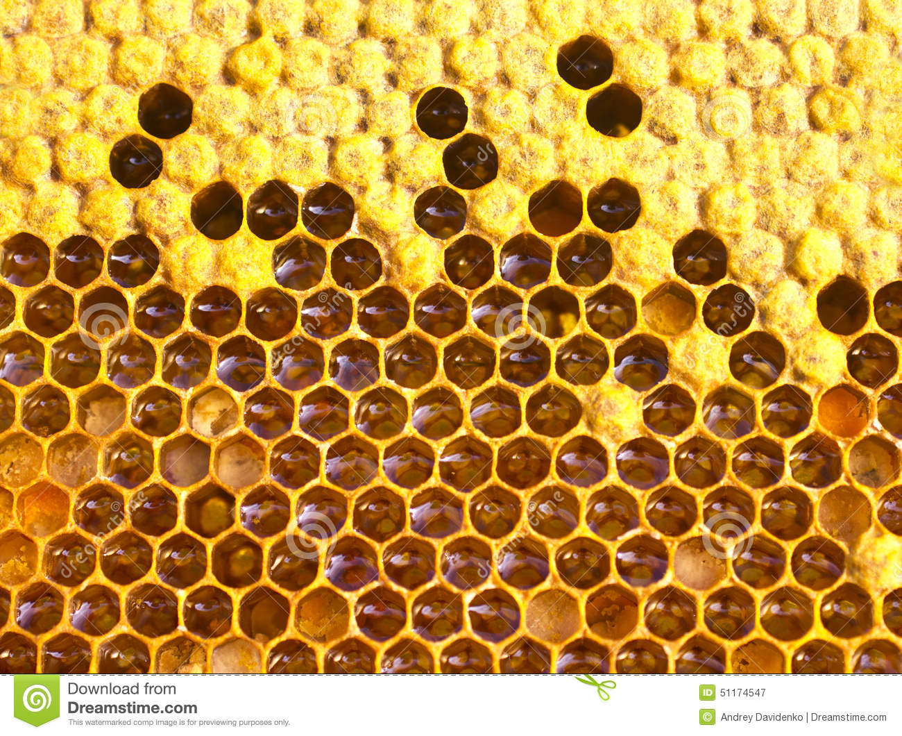 Pool Kaufen Celle Cocoons Bee Nectar Honey And Pollen Stock Photo Image
