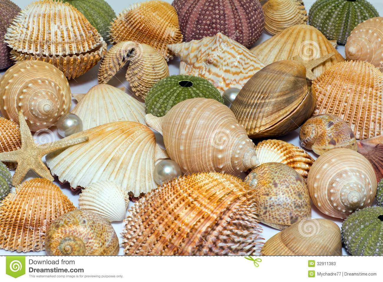 3d Shelves Wallpaper Collection Of Various Colorful Seashells On White