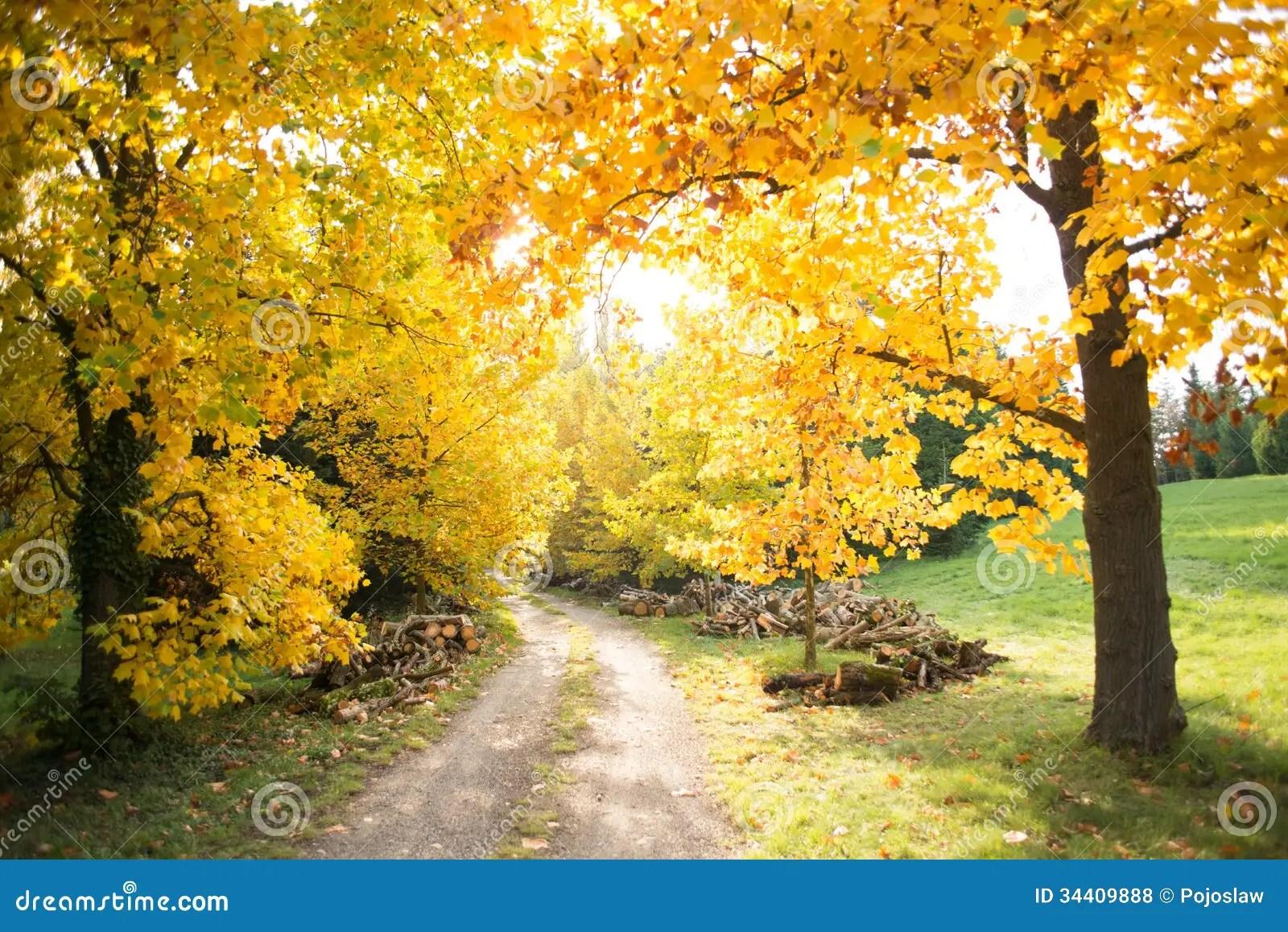 Fall Path Wallpaper Colorful Autumn Stock Photo Image Of Orange Season